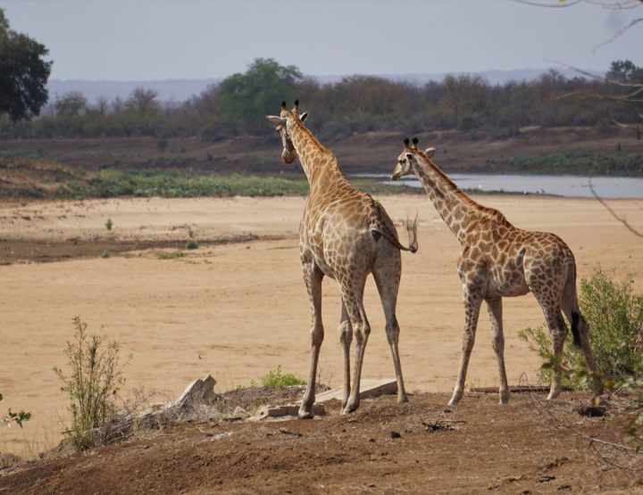 Mapungubwe NP, Limpopo's onbekende schat