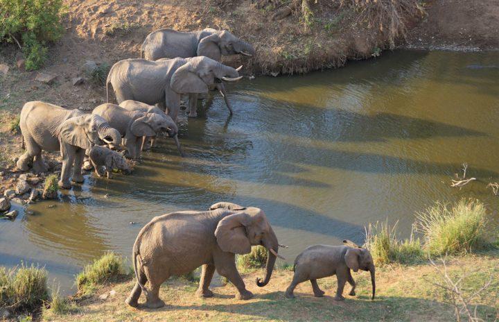 Wilde dagen in Kruger Nationaal Park