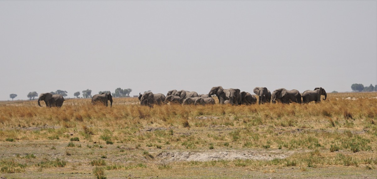 botswana-postdsc07892