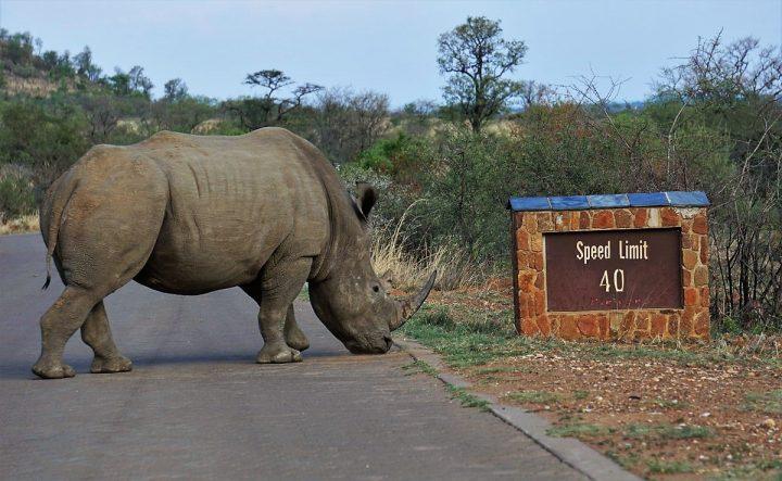 Prachtig Pilanesberg Nationaal Park