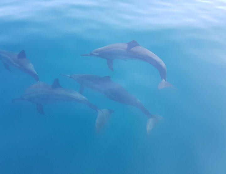 De 1001 dolfijnen van Kalpitiya